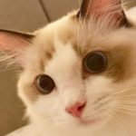 Profile photo of Agarshana